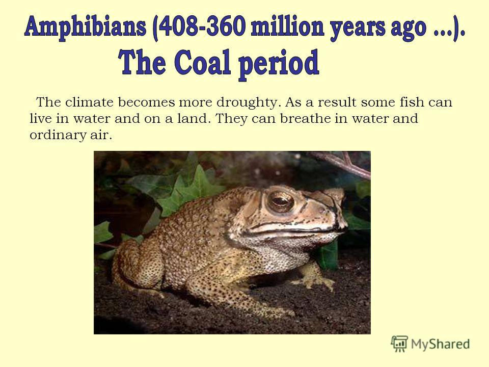 The climate becomes more droughty. As a result some fish can live in water and on a land. They can breathe in water and ordinary air.