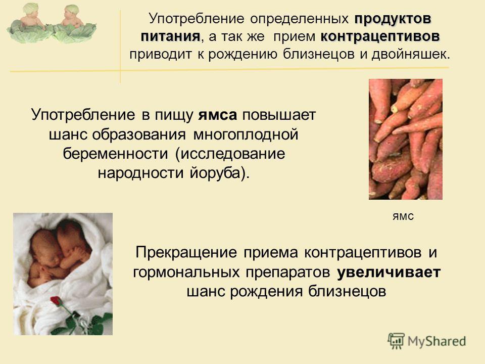 ямс Прекращение приема контрацептивов и гормональных препаратов увеличивает шанс рождения близнецов Употребление в пищу ямса повышает шанс образования многоплодной беременности (исследование народности йоруба). продуктов питанияконтрацептивов Употреб