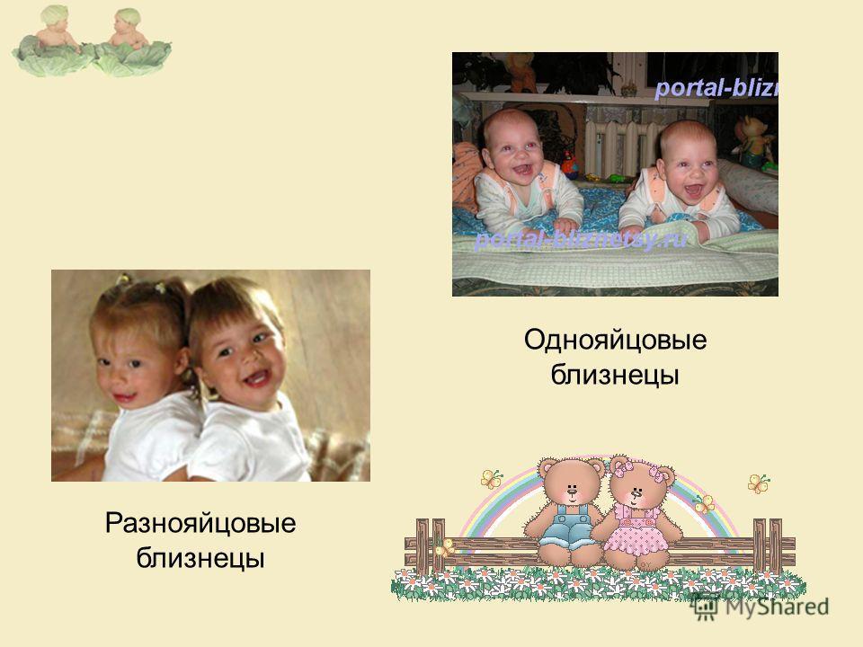 Однояйцовые близнецы Разнояйцовые близнецы