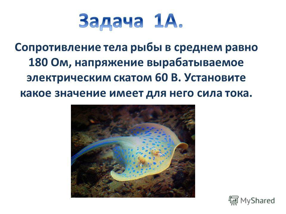 Сопротивление тела рыбы в среднем равно 180 Ом, напряжение вырабатываемое электрическим скатом 60 В. Установите какое значение имеет для него сила тока.