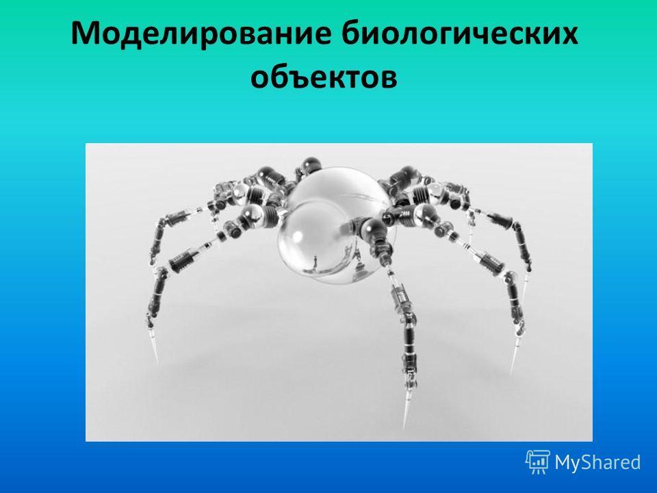 Моделирование биологических объектов