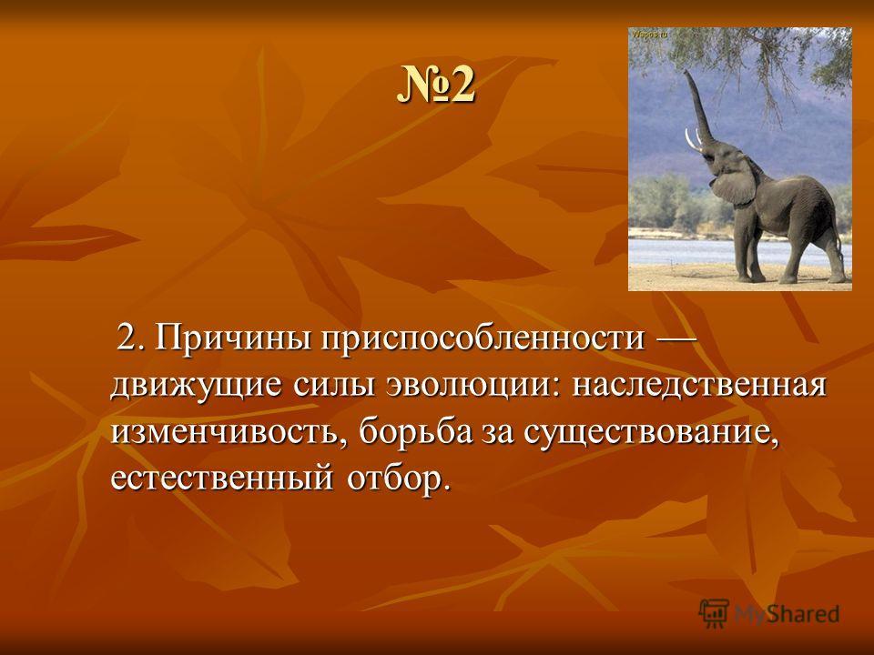 2 2. Причины приспособленности движущие силы эволюции: наследственная изменчивость, борьба за существование, естественный отбор.