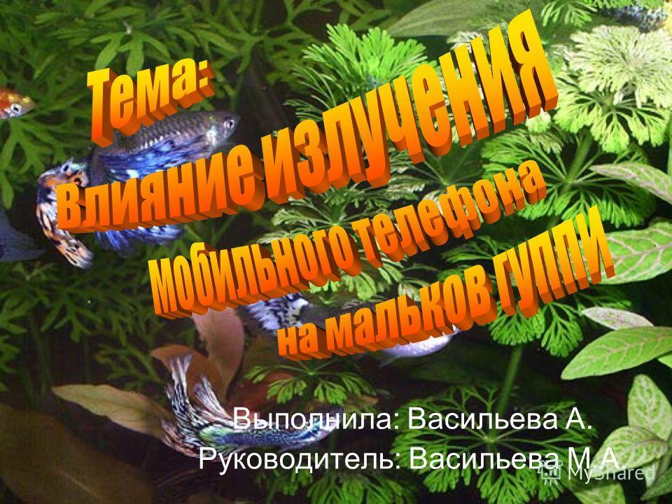 Выполнила: Васильева А. Руководитель: Васильева М.А.