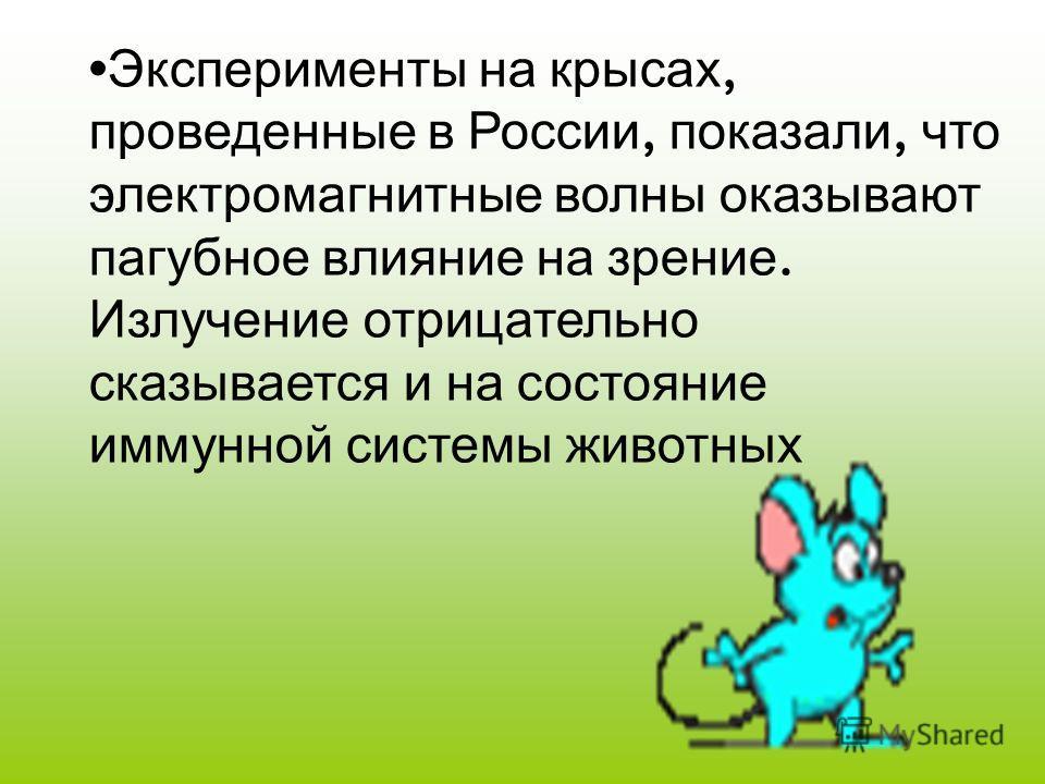 Эксперименты на крысах, проведенные в России, показали, что электромагнитные волны оказывают пагубное влияние на зрение. Излучение отрицательно сказывается и на состояние иммунной системы животных