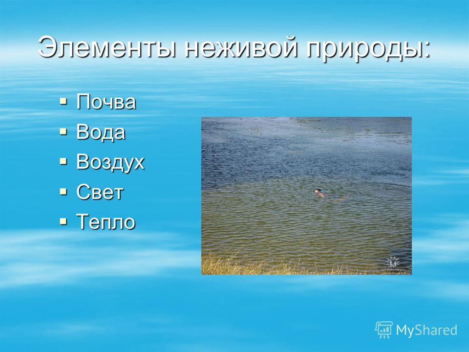 Элементы неживой природы: Почва Почва Вода Вода Воздух Воздух Свет Свет Тепло Тепло