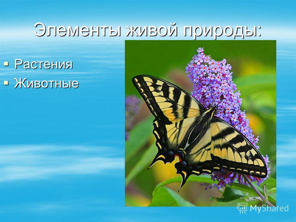 Элементы живой природы: Растения Растения Животные Животные