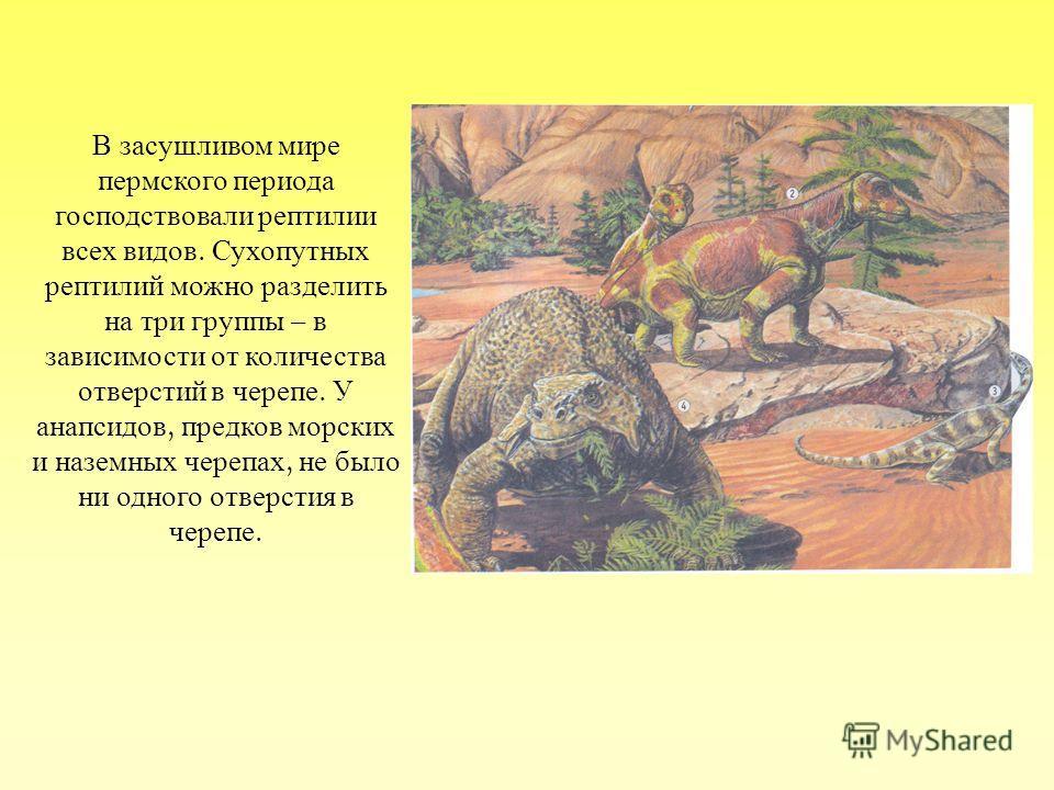 В засушливом мире пермского периода господствовали рептилии всех видов. Сухопутных рептилий можно разделить на три группы – в зависимости от количества отверстий в черепе. У анапсидов, предков морских и наземных черепах, не было ни одного отверстия в