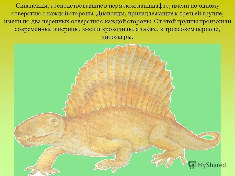 Синапсиды, господствовавшие в пермском ландшафте, имели по одному отверстию с каждой стороны. Диапсиды, принадлежащие к третьей группе, имели по два черепных отверстия с каждой стороны. От этой группы произошли современные ящерицы, змеи и крокодилы,