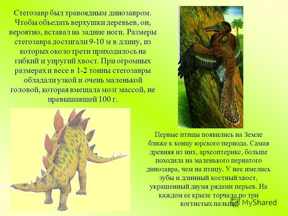 Стегозавр был травоядным динозавром. Чтобы объедать верхушки деревьев, он, вероятно, вставал на задние ноги. Размеры стегозавра достигали 9-10 м в длину, из которых около трети приходилось на гибкий и упругий хвост. При огромных размерах и весе в 1-2