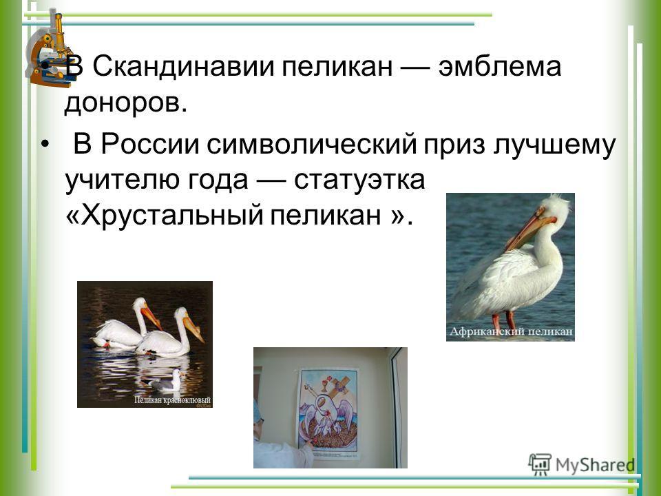 В Скандинавии пеликан эмблема доноров. В России символический приз лучшему учителю года статуэтка «Хрустальный пеликан ».