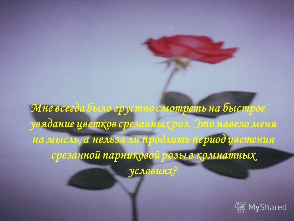 Мне всегда было грустно смотреть на быстрое увядание цветков срезанных роз. Это навело меня на мысль, а нельзя ли продлить период цветения срезанной парниковой розы в комнатных условиях?