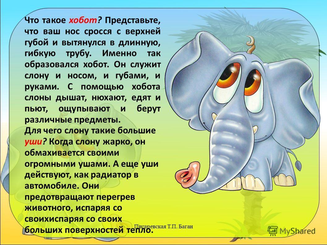 Писаревская Т.П. Баган Что такое хобот? Представьте, что ваш нос сросся с верхней губой и вытянулся в длинную, гибкую трубу. Именно так образовался хобот. Он служит слону и носом, и губами, и руками. С помощью хобота слоны дышат, нюхают, едят и пьют,