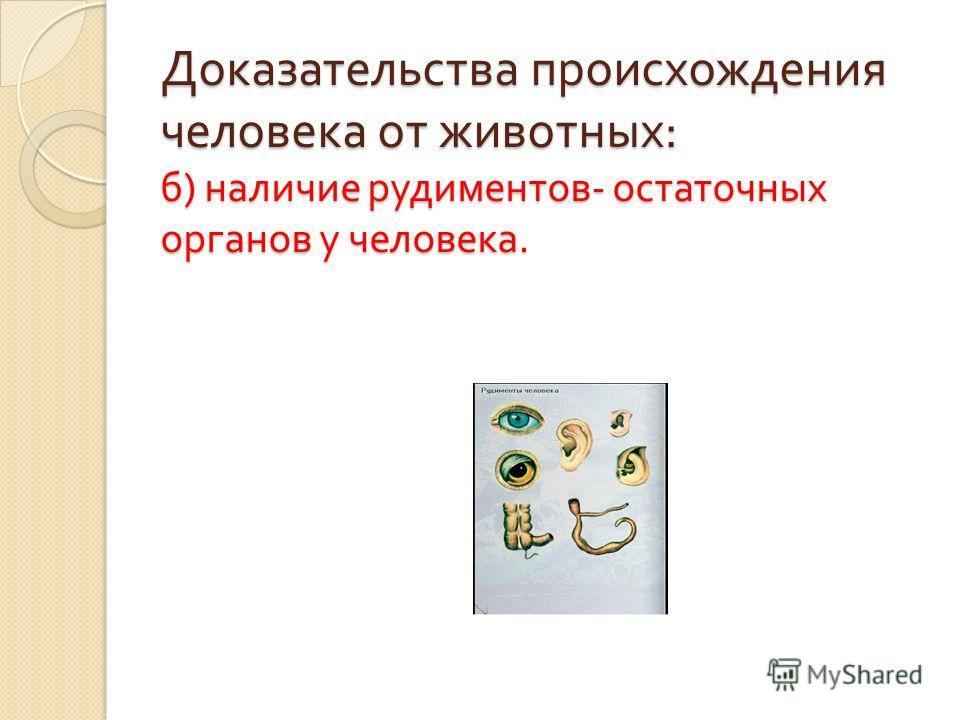 Доказательства происхождения человека от животных : б ) наличие рудиментов - остаточных органов у человека.
