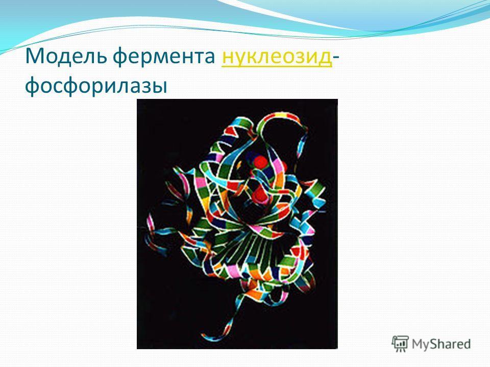 Модель фермента нуклеозид- фосфорилазынуклеозид