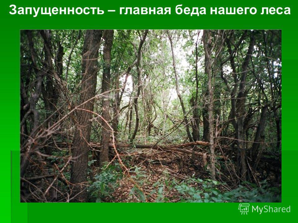Запущенность – главная беда нашего леса