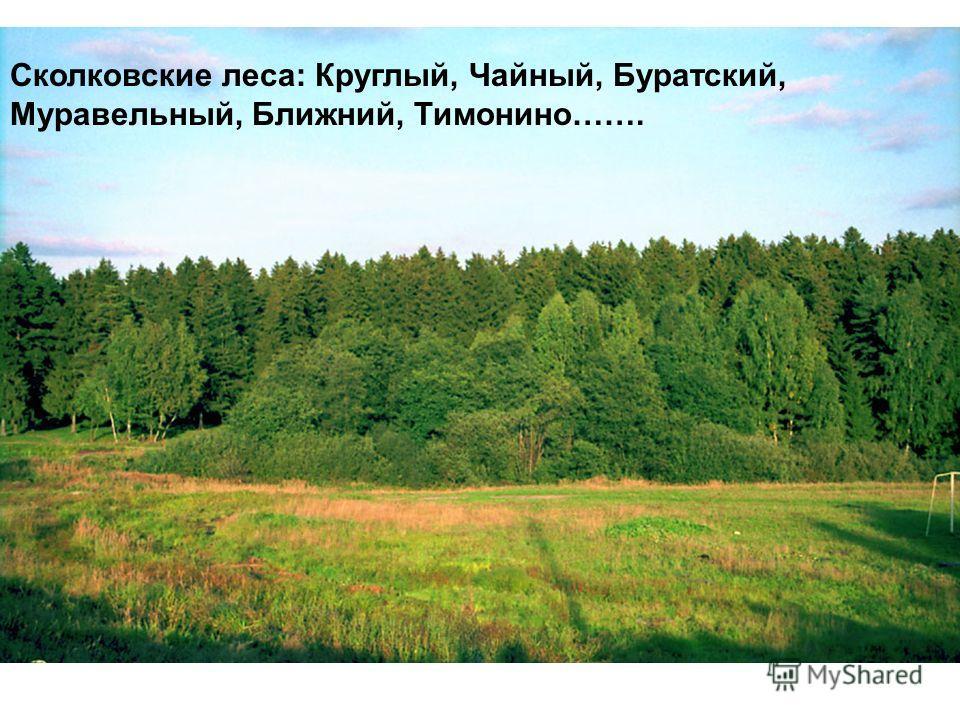 Сколковские леса: Круглый, Чайный, Буратский, Муравельный, Ближний, Тимонино…….
