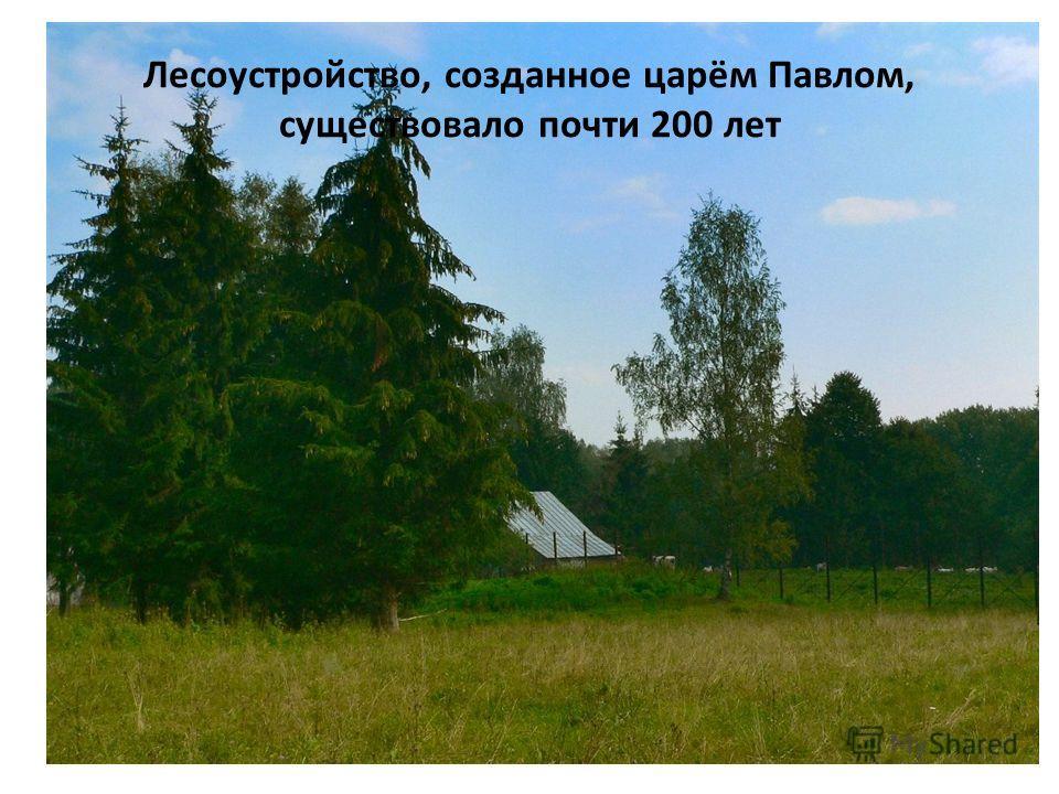 Лесоустройство, созданное царём Павлом, существовало почти 200 лет
