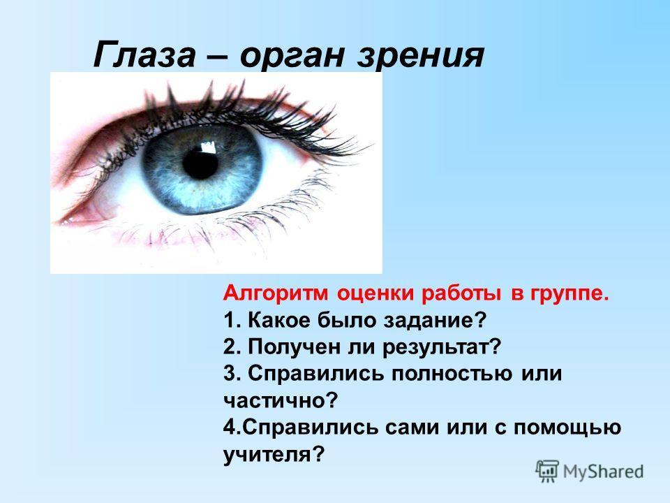 Глаза – орган зрения Алгоритм оценки работы в группе. 1. Какое было задание? 2. Получен ли результат? 3. Справились полностью или частично? 4.Справились сами или с помощью учителя?