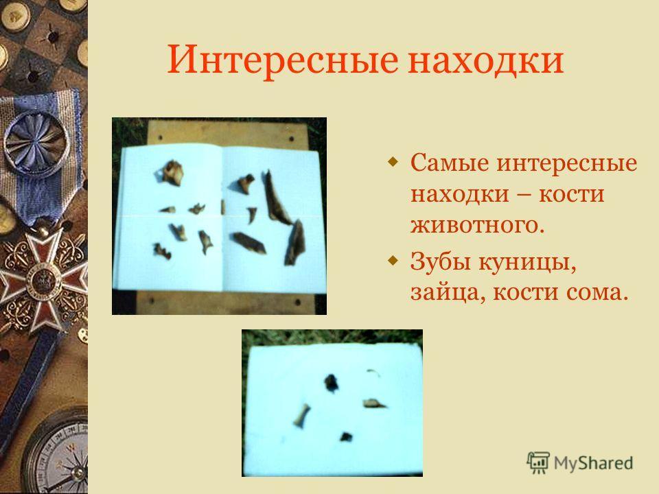 Интересные находки Самые интересные находки – кости животного. Зубы куницы, зайца, кости сома.