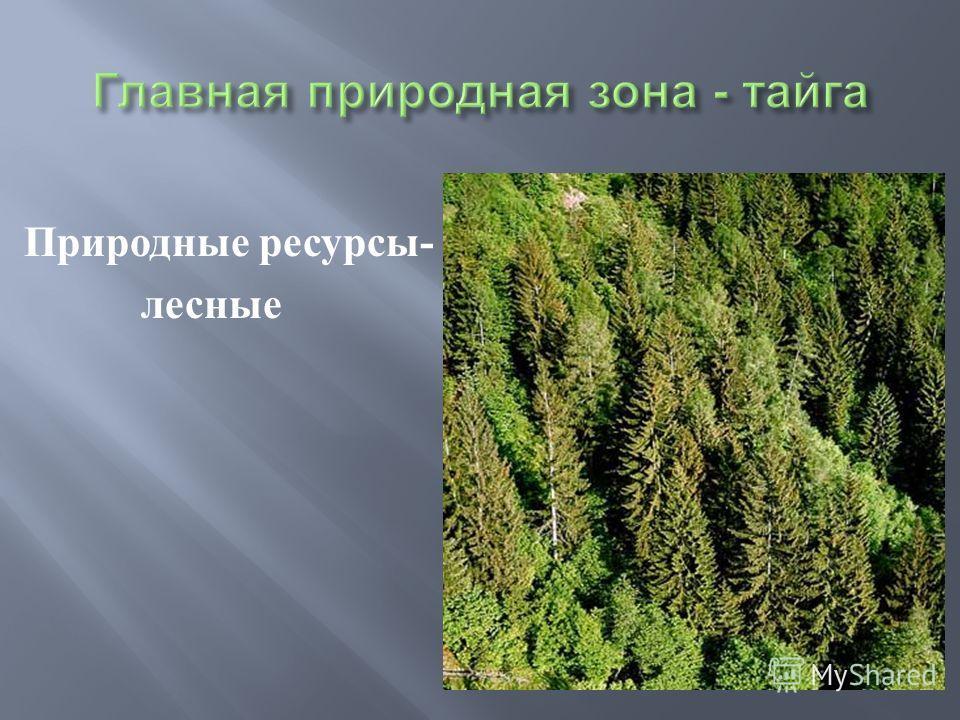 Природные ресурсы - лесные