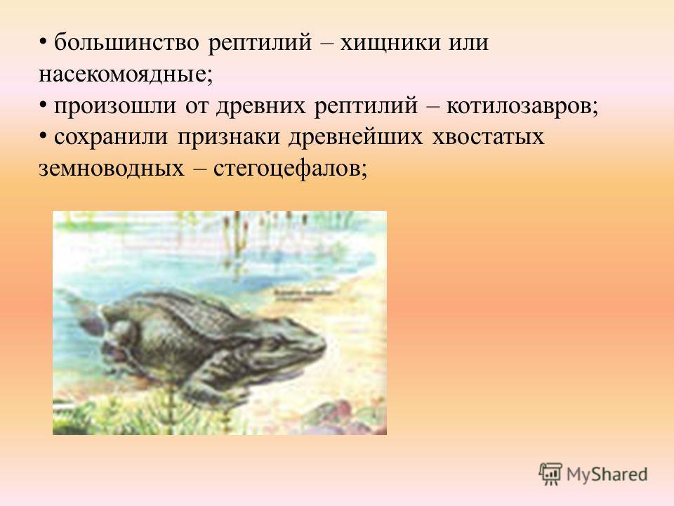 большинство рептилий – хищники или насекомоядные; произошли от древних рептилий – котилозавров; сохранили признаки древнейших хвостатых земноводных – стегоцефалов;