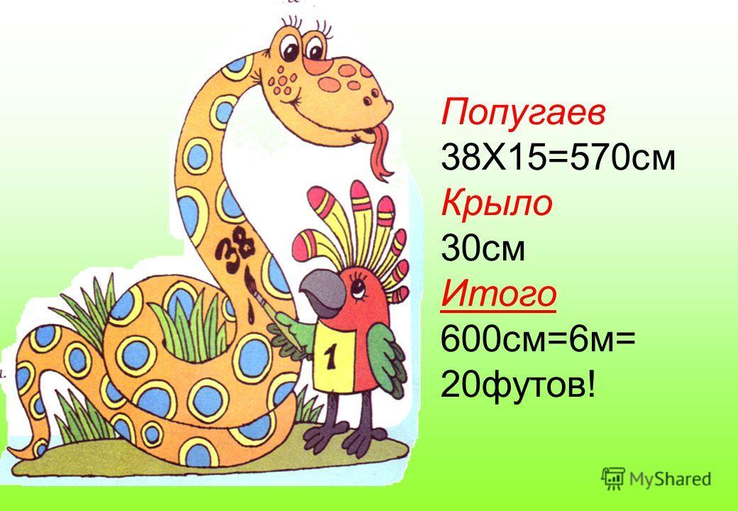Попугаев 38Х15=570см Крыло 30см Итого 600см=6м= 20футов!