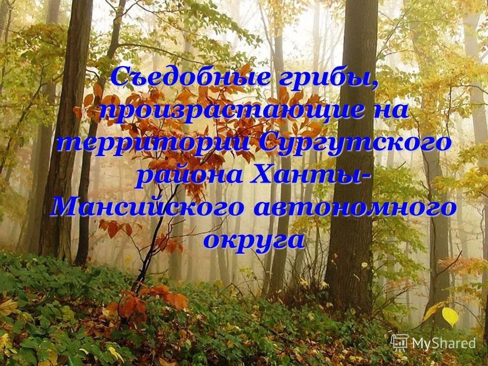Съедобные грибы, произрастающие на территории Сургутского района Ханты- Мансийского автономного округа
