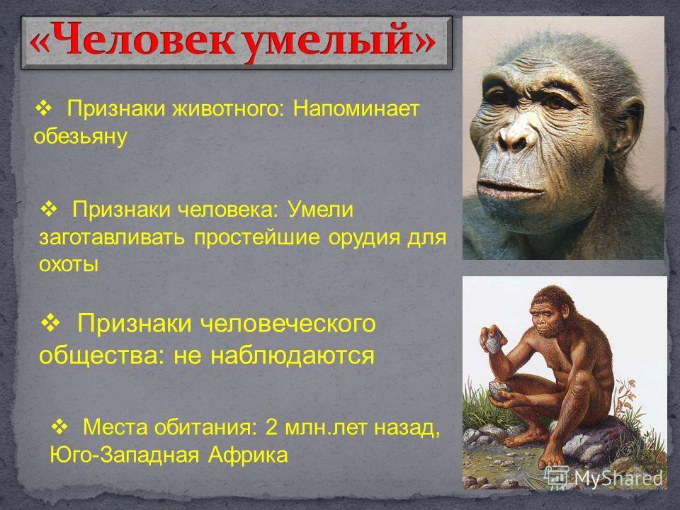 Признаки животного: Напоминает обезьяну Признаки человека: Умели заготавливать простейшие орудия для охоты Признаки человеческого общества: не наблюдаются Места обитания: 2 млн.лет назад, Юго-Западная Африка