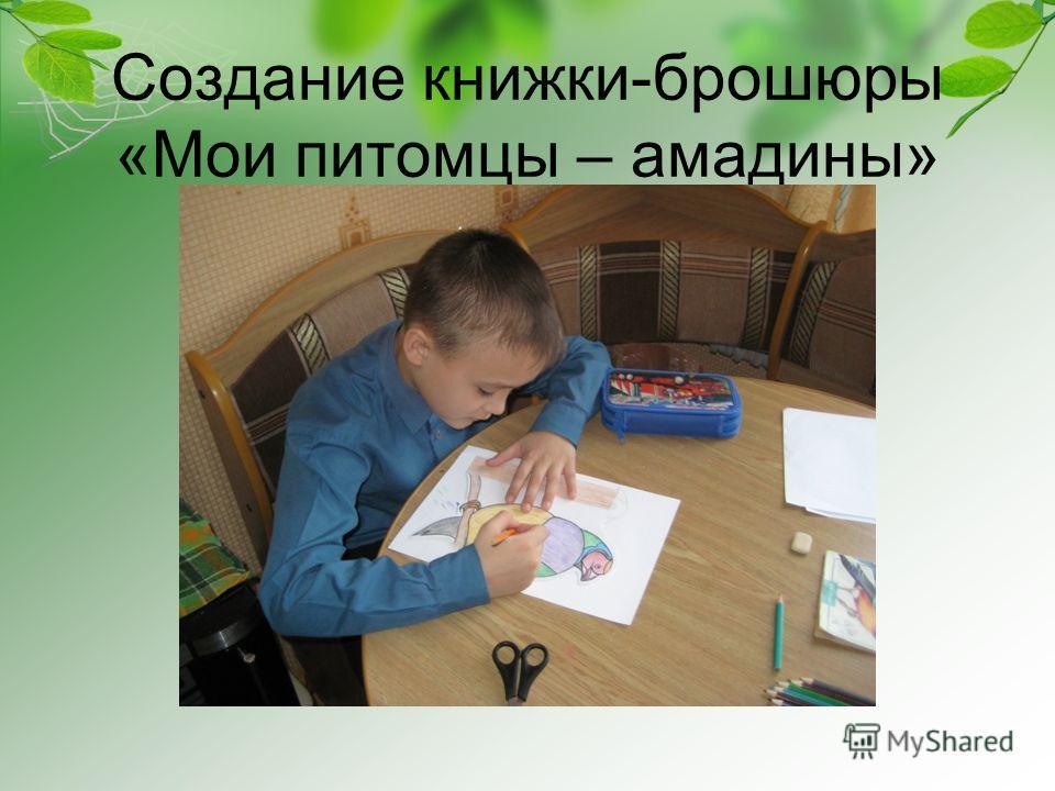Создание книжки-брошюры «Мои питомцы – амадины»