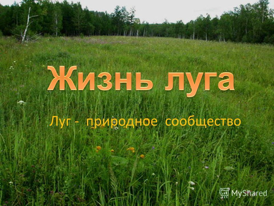 Луг - природное сообщество