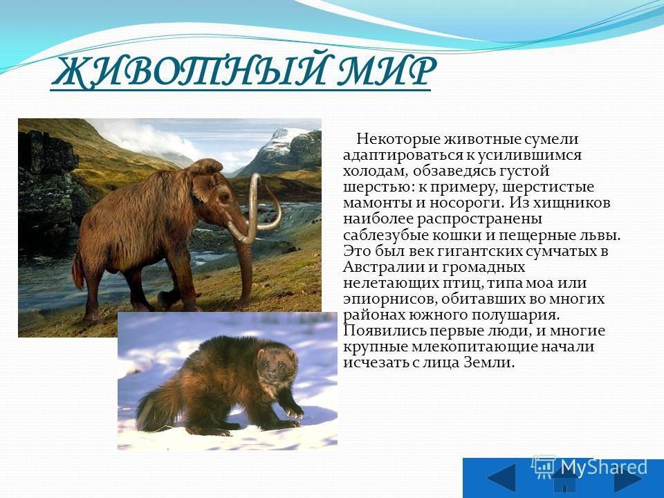 ЖИВОТНЫЙ МИР Некоторые животные сумели адаптироваться к усилившимся холодам, обзаведясь густой шерстью: к примеру, шерстистые мамонты и носороги. Из хищников наиболее распространены саблезубые кошки и пещерные львы. Это был век гигантских сумчатых в
