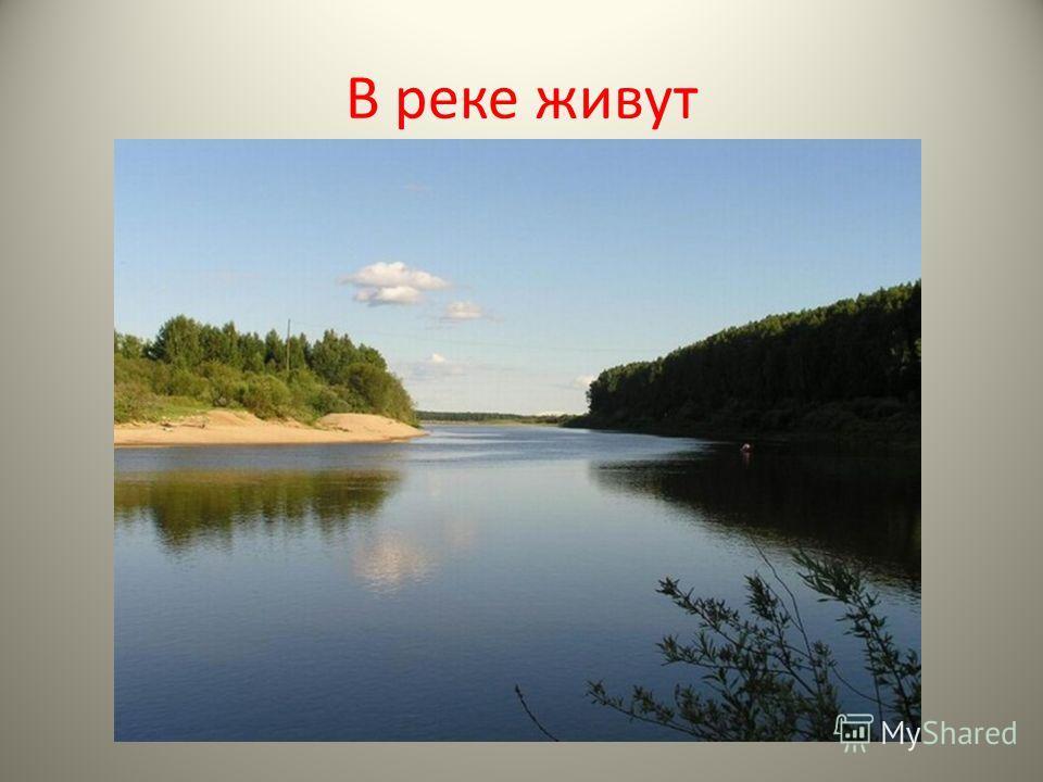 В реке живут