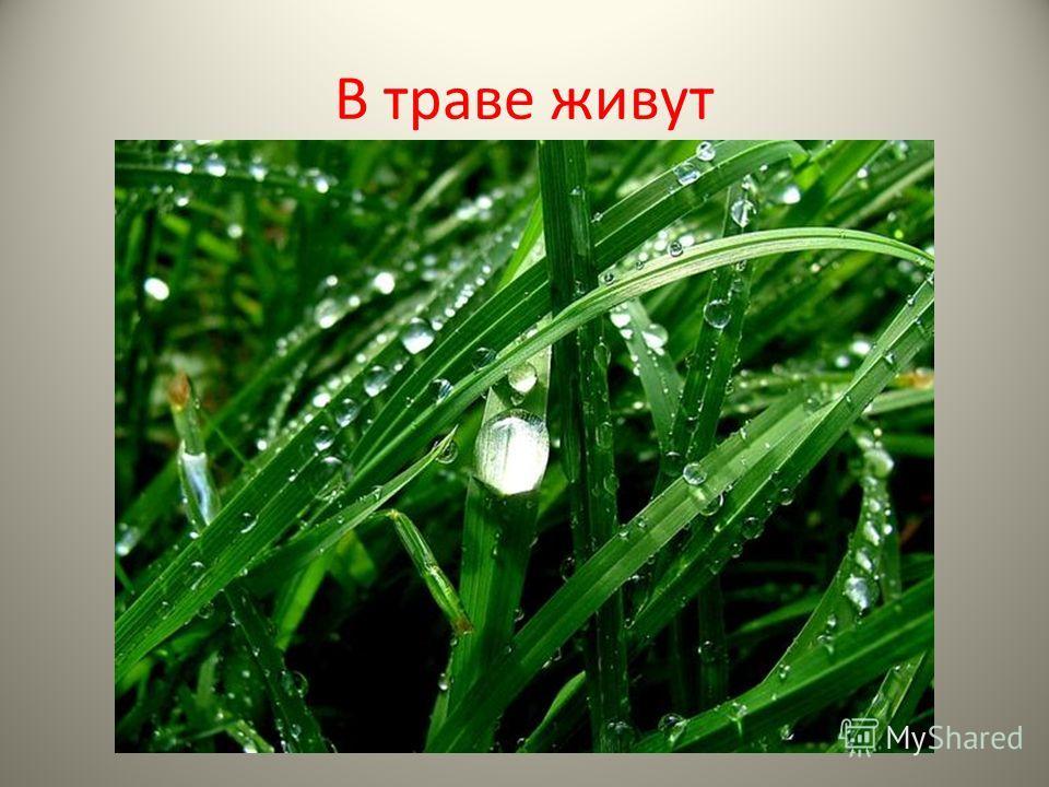 В траве живут