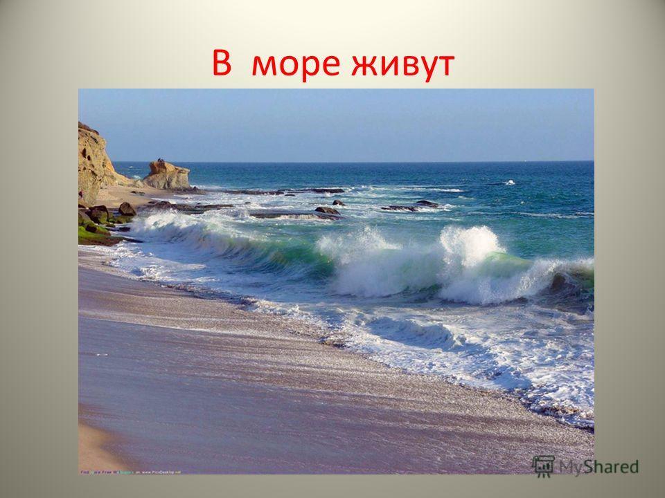 В море живут