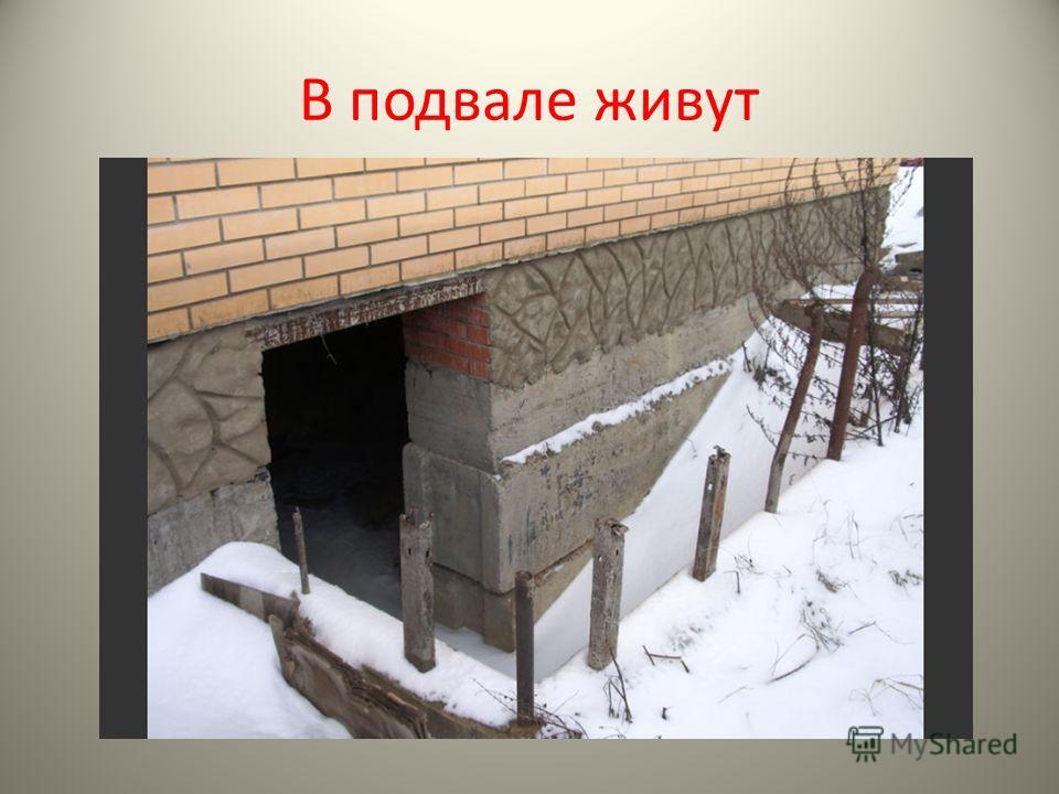 В подвале живут