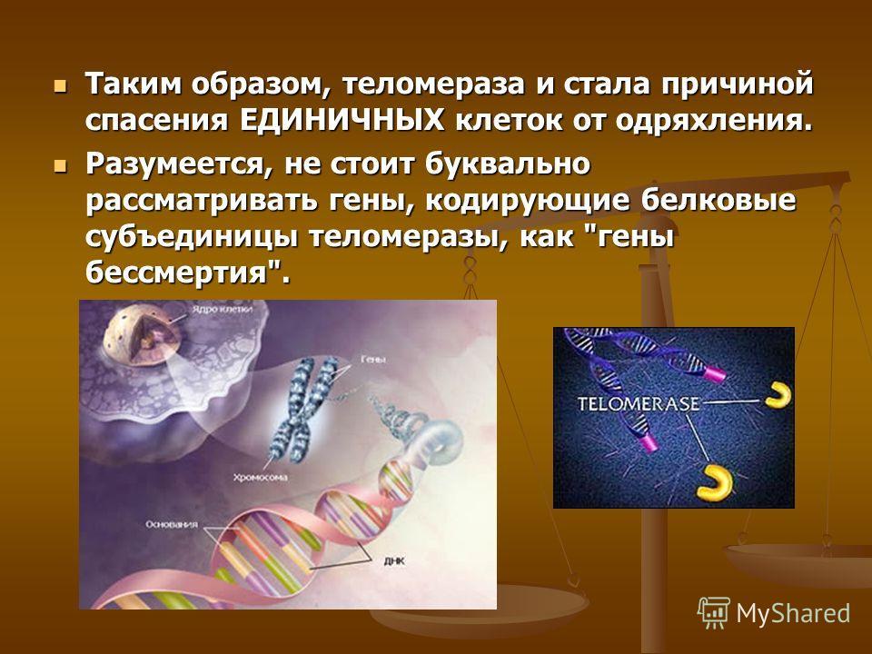 Таким образом, теломераза и стала причиной спасения ЕДИНИЧНЫХ клеток от одряхления. Таким образом, теломераза и стала причиной спасения ЕДИНИЧНЫХ клеток от одряхления. Разумеется, не стоит буквально рассматривать гены, кодирующие белковые субъединицы
