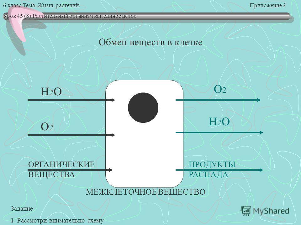 6 класс Тема. Жизнь растений. Приложение 3 Урок 45 (8) Растительный организм как единое целое Обмен веществ в клетке H2OH2O H2OH2O O2O2 O2O2 ОРГАНИЧЕСКИЕ ВЕЩЕСТВА ПРОДУКТЫ РАСПАДА МЕЖКЛЕТОЧНОЕ ВЕЩЕСТВО Задание 1. Рассмотри внимательно схему.