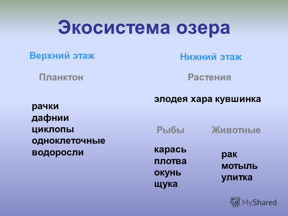 Экосистемы 3 класс