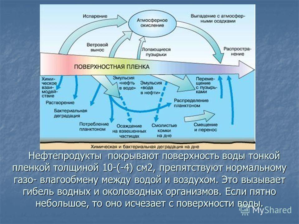Нефтепродукты покрывают поверхность воды тонкой пленкой толщиной 10-(-4) см2, препятствуют нормальному газо- влагообмену между водой и воздухом. Это вызывает гибель водных и околоводных организмов. Если пятно небольшое, то оно исчезает с поверхности