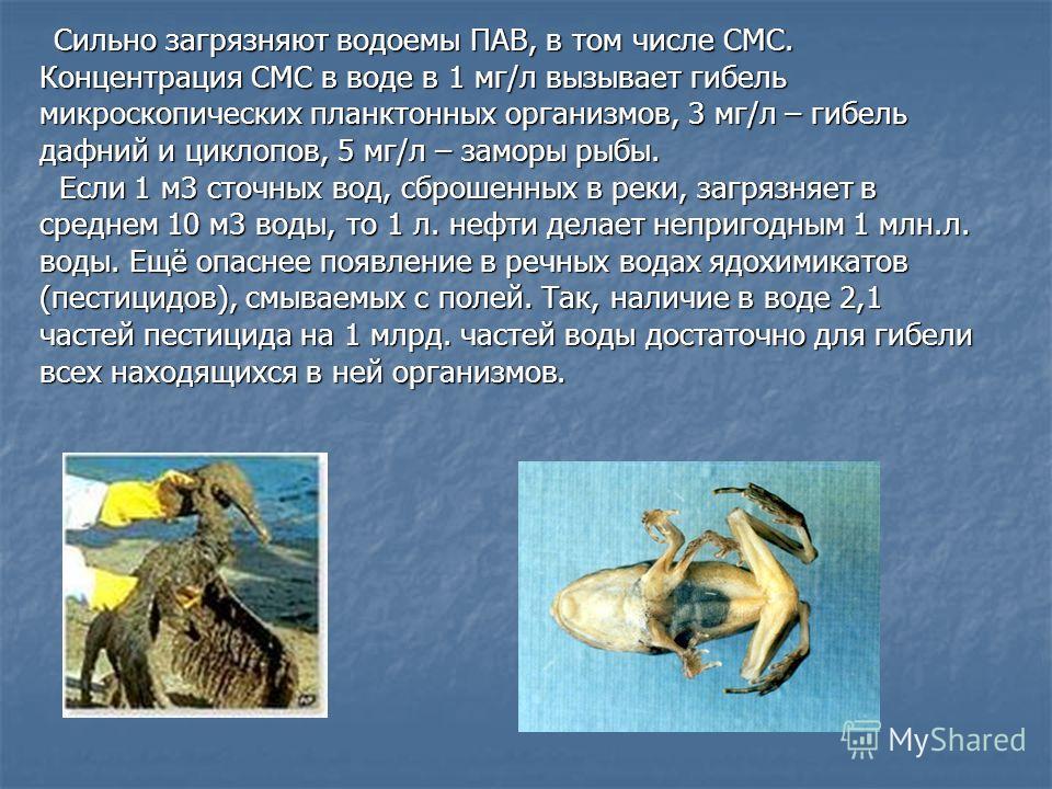 Сильно загрязняют водоемы ПАВ, в том числе СМС. Сильно загрязняют водоемы ПАВ, в том числе СМС. Концентрация СМС в воде в 1 мг/л вызывает гибель микроскопических планктонных организмов, 3 мг/л – гибель дафний и циклопов, 5 мг/л – заморы рыбы. Если 1