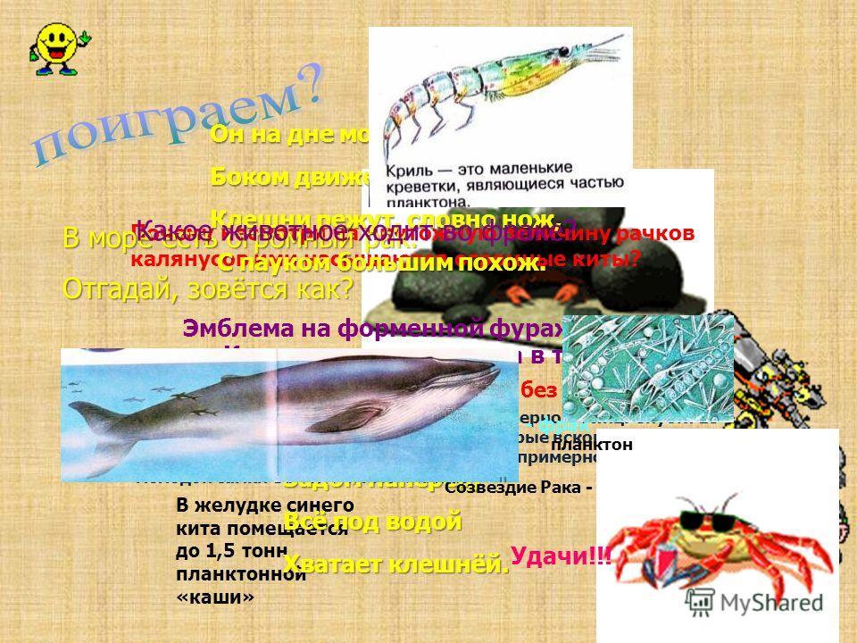 Какая басня просто немыслима без него? Почему несмотря на ничтожную величину рачков калянусов ими насыщаются огромные киты? В желудке синего кита помещается до 1,5 тонн планктонной «каши» В одной кладке самки дафнии бывает примерно 60 яиц. Спустя 15