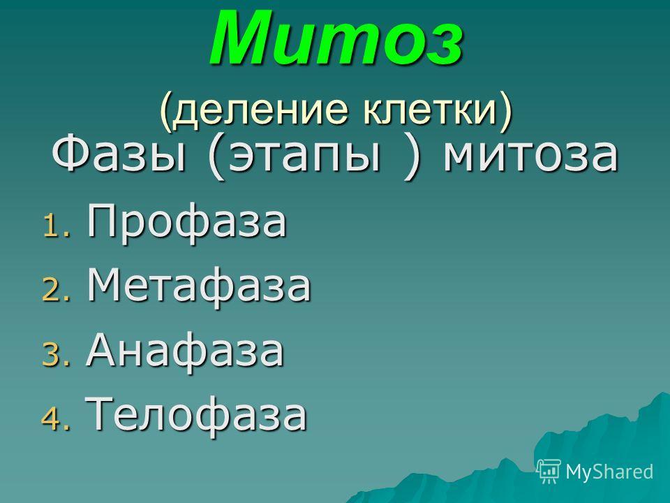 Митоз (деление клетки) Фазы (этапы ) митоза 1. Профаза 2. Метафаза 3. Анафаза 4. Телофаза