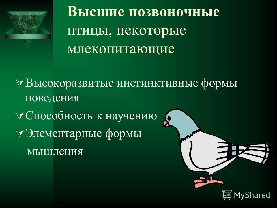 Высшие позвоночные птицы, некоторые млекопитающие Высокоразвитые инстинктивные формы поведения Способность к научению Элементарные формы мышления