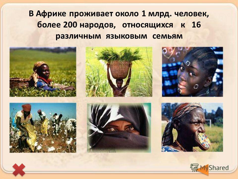 В Африке проживает около 1 млрд. человек, более 200 народов, относящихся к 16 различным языковым семьям