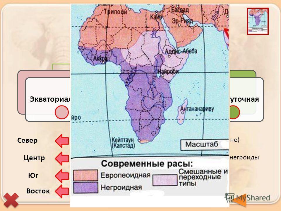Расы ЭкваториальнаяЕвропеоиднаяПромежуточная Берберы и арабы (туареги, алжирцы, египтяне) Бушмены и готтентоты Эфиопы, малагасийцы Нилоты, пигмеи, масаи, народы банту и др. негроиды Север Центр Юг Восток