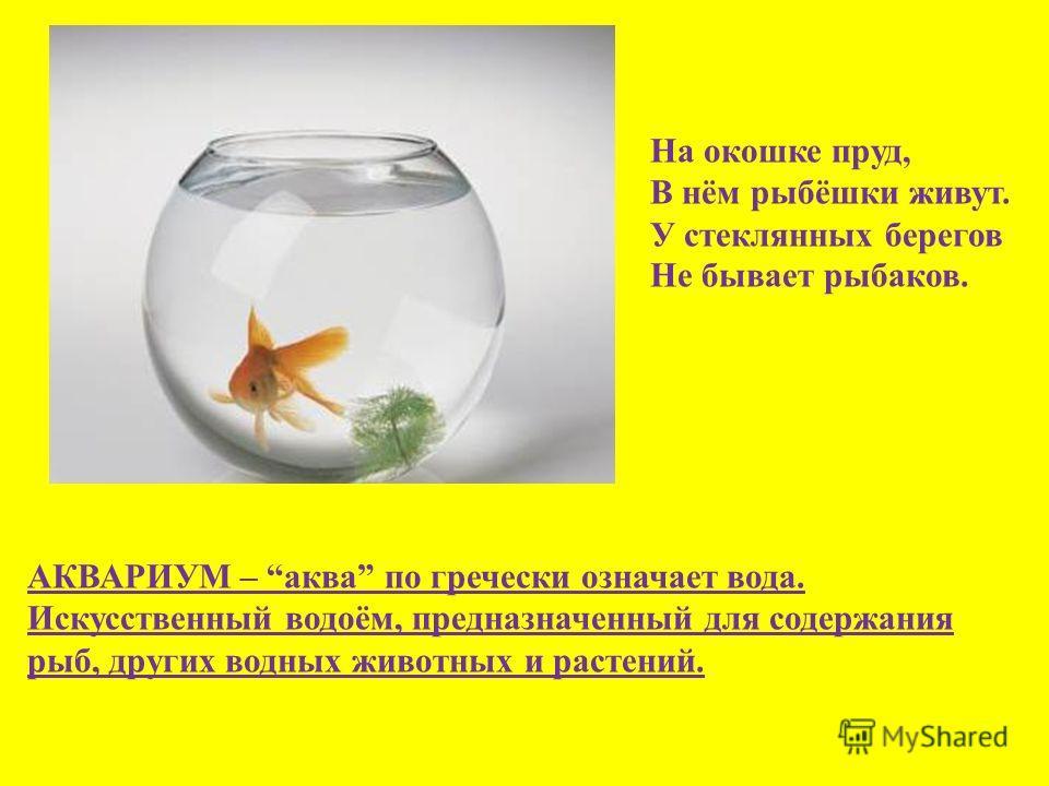 На окошке пруд, В нём рыбёшки живут. У стеклянных берегов Не бывает рыбаков. АКВАРИУМ – аква по гречески означает вода. Искусственный водоём, предназначенный для содержания рыб, других водных животных и растений.
