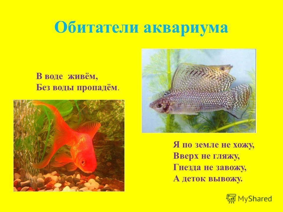 Обитатели аквариума В воде живём, Без воды пропадём. Я по земле не хожу, Вверх не гляжу, Гнезда не завожу, А деток вывожу.
