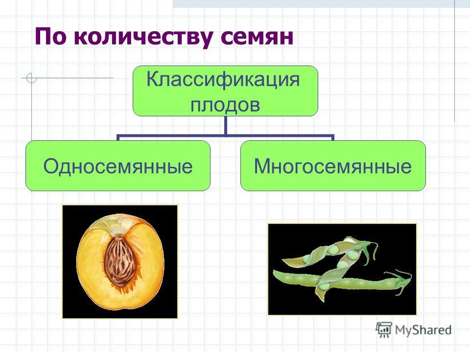 По количеству семян Классификация плодов ОдносемянныеМногосемянные