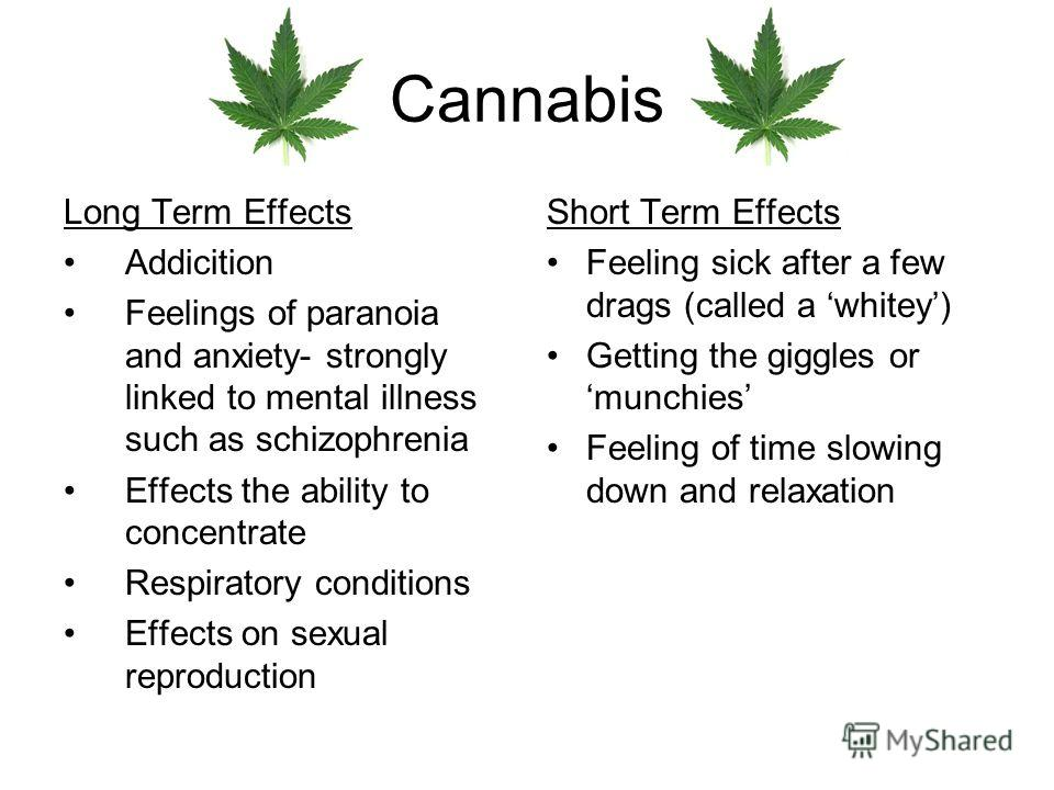 Cannabis Long Term Effects Addicition Feelings of paranoia and anxiety- strongly linked to mental illness such as schizophrenia Effects the ability to concentrate Respiratory conditions Effects on sexual reproduction Short Term Effects Feeling sick a