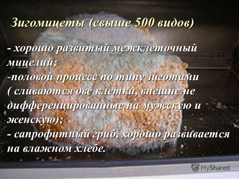 Зигомицеты (свыше 500 видов) - хорошо развитый межклеточный мицелий; -половой процесс по типу зиготами ( сливаются две клетки, внешне не дифференцированные на мужскую и женскую); - сапрофитный гриб, хорошо развивается на влажном хлебе.